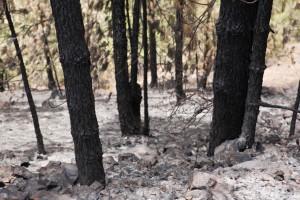 El Cabildo tinerfeño forma a voluntarios para prevenir incendios forestales